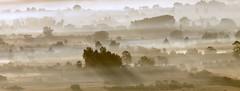 Beautiful misty morning (maria xenou) Tags: earlymorning mistymorning misty moments momente greece peloponnese griechenland morgens peloponnes westpeloponnes landscape mediterranean mittelmeer landschaft ελλαδα πρωι ομιχλη φωτοδρομοσ τοπιο πελοποννησοσ φυση μαρια φθινοπωρο νοεμβριοσ ξενου ταξιδι δεντρα bäume trees autumn herbst νομοσηλειασ elis atmosphere atmosphäre foggy peloponnisos δυτικηελλαδα canoneos1100d