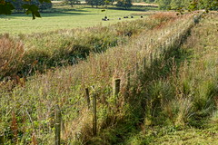 Double fence. (artanglerPD) Tags: double fence posts barbed wire overgrown long