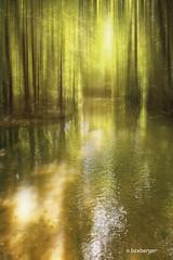 reve de  lumiere (nicole boxberger) Tags: lumiere eau arbre reflets revelumiere