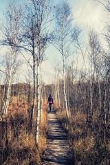 sonntagsspaziergang | sunday walk (lichtmaler.at) Tags: ibmermoor baum himmel wolken weg tree sky clouds blau blue braun brown boardwalk