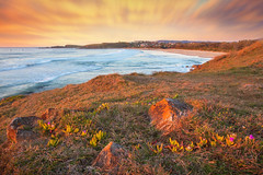 Emerald Beach || COFFS COAST || NSW (rhyspope) Tags: australia aussie nsw new south wales coffs harbour coast coastal sunrise nature rhys pope rhyspope canon 5d mkii warm golden emerald beach rocks flowers wildflower marine
