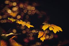 (Anita van Schaik) Tags: forest woods serene plants botanical bokeh nikon morning autumn fall lights sunlight sureal backlights depth field