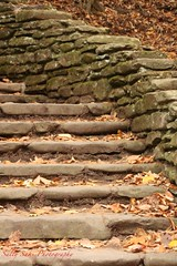 IMG_9240 (Sally Knox Sakshaug) Tags: letchworth state park new york fall autumn october colors leaf leaves orange yellow stone grey gray brown green red beautiful pretty scenic genesee river portagecanyon stonework rock civilianconservationcorps cccc closeup stair stairs staircase wolf creek area small falls delicate simple quiet