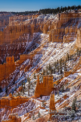 _MG_4627.jpg (Chris Murdoch Photography) Tags: brycecanyon brycecanyonnationalpark canyon canyons chrismurdoch chrismurdochphotography hoodoo hoodoos nationalparks snow snowinbrycecanyon utah