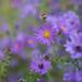 Purple+Flowers
