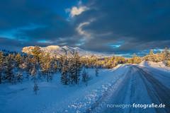 DSC02596 (norwegen-fotografie.de) Tags: norw norwegen norway norge femunden femundsmarka villmark hedmark see wildnis wald landschaft