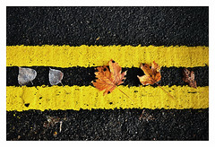 "An unlucky place to fall ! (CJS*64 ""Man with a camera"") Tags: cjs64 craigsunter cjs craig nikon nikkorlens nikkor nikond7000 dslr d7000 18mm105mmlens manchester yellow yellowlines unlucky parking noparking leaves fallen 5 five"