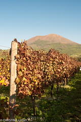 untitled-2 (christinaluthy) Tags: italy europe volcano mountvesuvius olive winebarrel wine grapes vineyard vesuvio grapevine