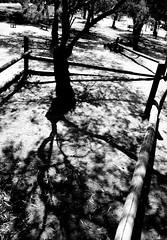 Untitled (lir segev) Tags: lighting street hardlight blackwhite bh bw blackandwhite harshlight streetphotography