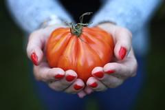 Organic (*Chris van Dolleweerd*) Tags: hands woman dof bokeh healthy organic tomato red 50mm food naturallight chrisvandolleweerd