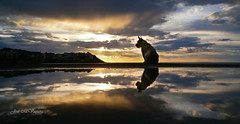 Paty y el amanecer/Paty and the Dawn (josemanuelvaquera) Tags: amaneceres reflejos mascotas nubes cielos contraluces