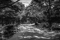 Fuerte Bulnes (Medigore) Tags: canont3i aire libre serenidad campo paisaje ngc nubes landscape black white chile tree forest blanco negro monocromtico fondo landscapes light shadows bosque clouds rbol planta parque medigore snow