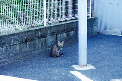 Today's Cat@2016-10-25 (masatsu) Tags: cat thebiggestgroupwithonlycats catspotting pentax mx1
