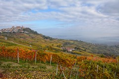 La Morra in autumn (andycosta91) Tags: unesco landscape panorama vigne grapes vineyard yellow autunno fall autumn langhe piemonte piedmont italia italy