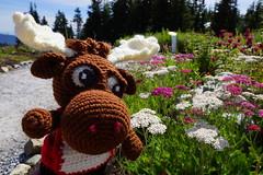 DSC00099 (The Crochet Crowd) Tags: crochetmoose amigurumi moose crochet doll alaska britishcolumbia thecrochetcrowd michaelsellick jeannesteinhilber danielzondervan crochetcruise mooseontheloose