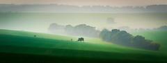 Autumn Mist 1 (dave.tay1or) Tags: 2016 75300mm ashe autumnfall countryside em5 hampshire landscape latest lightroom m43 mzuiko mft microfourthirds olympus sunset