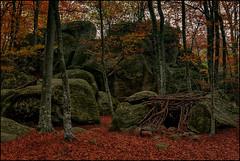 ENCHANTED FOREST. (ROQUES ENCANTADAS) (TOYOGRACOR) Tags: aplusphoto color flickrdiamond bej canon explore flickr dof mygearandme mygearandmepremium mygearandmebronze mygearandmesilver godlovesyou flickrflorescloseupmacros otoño rojo rojos mywinners follaje hoja abstracto serenidad autumn profundidad roks rocas hayas cabaña refugio musgo verde santfeliudepallerols cataluña cataluya rocasencantadas olot garrotxa españa spain fageda hayedo piedrasencantadas