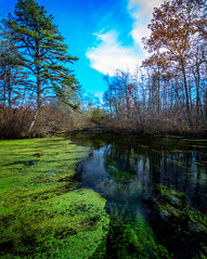 Creek (jamesgriffithsphotography) Tags: peace peaceful creek steam river park beauty beautiful fall autumn longisland ny swamp murky black green sky clouds blue evergreen trees forest tree