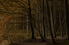 beech forest, Rugen (DidaK) Tags: baltic germany rugen beach cliffs ocean roots sea