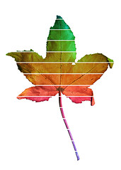 untitled (brescia, italy) (bloodybee) Tags: 365project leaf fall autumn colors rainbow stilllife white