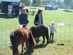 10/9/16 - Page Valley Fairgrounds: Megan and Remy (mavra_chang) Tags: 47thannualpagecountyheritagefestival animals virginiatrip family fetus ponies domestichorses horses equines