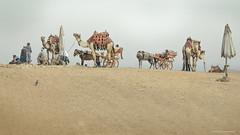 Queue at the pyramids (Jodi Newell) Tags: cairo camels canon dunes egypt horses jodinewell jodisjourneys jodisjourneysphotosgmailcom landscape people pyramids queue sand travel umbrella