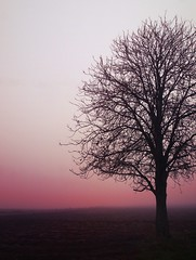 Losing Directions. (god_save_the_green) Tags: tree sunset horizon fog brouillard december2016 olympusepl1 mathildeaudiau black pink dark lines sky pinksky solitude loneliness