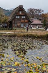 Village historique de Shirakawa-go (kingfisher001) Tags: rouge blanche district gasshozukuri ghasso gifu historiques japon kanazawa maisons ono pente pentus rivière shirakawago sho shokawa takayama toitdechaume type vallée village villages