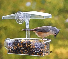 Saying Thanks (smiles7) Tags: wildlife bird tuftedtitmouse 3662016