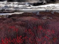 Peggys Cove Lighthouse (photo fiddler) Tags: holly barrens peggyscove novascotia lighthouse december 2016