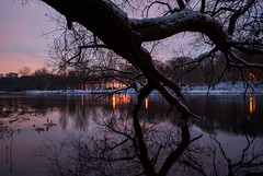 A Postcard (modestmoze) Tags: night dark postcard trees treeline 2016 500px lights winter pink red reflection river water flowing running snow white black shadows branches green shore travel explore vilnius lithuania sky clouds cloudy outside outdoors out brown yellow beautiful amazing colorful hill fallen