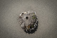 Auswahl-5423 (wolfgangp_vienna) Tags: old beach strand thailand island asia asien alt insel ko flotsam trat kut treibgut kood aophrao kokood schwemmgut kokut kohkut thesunshineresort