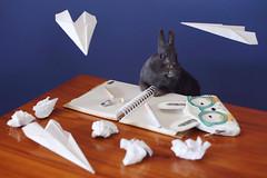 [50/52] Homework (emilykember) Tags: blue cute rabbit bunny pen pencil canon project paper notebook 50mm grey book luna planes homework pencilcase 6d netherlanddwarf 52weeks paperplanes 52weeksproject itsagiraffe 52weeksoflunaandoliver