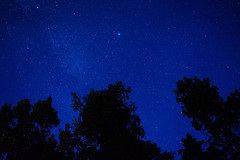 andy, you're a star (mind_surfer) Tags: longexposure trees sky nature night stars nacht natur himmel bume sterne milkyway campingtrip langzeitbelichtung mecklenburgvorpommern milchstrase