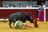DSC_9426.jpg (josi unanue) Tags: animal blood spain bull arena bullfighter sansebastian esp toro traje asta sangre espada bullring unanue guipuzcoa matador torero tauromaquia sufrimiento cuerno ureña banderilla banderilero