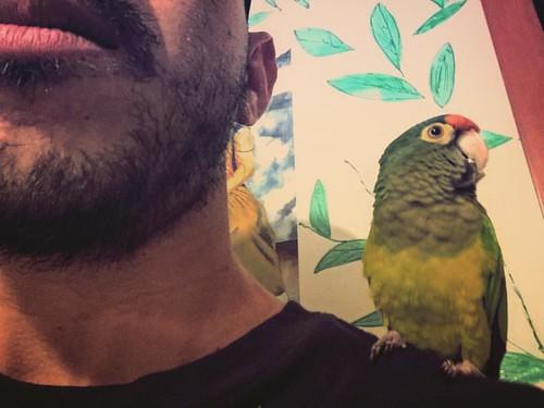 Selfie con esta guapura #selfie #pericos #visitante