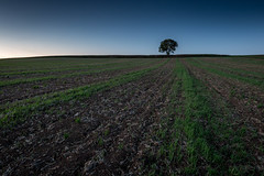 The Legacy Tree (holding_justin) Tags: france tree nature canon europe outdoor tokina uga extrieur arbre champ picardie plantations aisne ultrawideangle 1116 heurebleue tranches eos70d