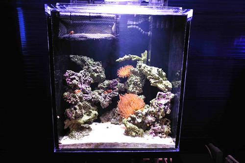 Educational Anemone Exhibit - New Bedford Oceanarium - MA