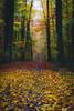 Herbst. (TimSchuler) Tags: herbst sal70200g linkenheimhochstetten dslra850 sonyalpha850
