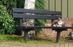 cat on a cold steel bench (georgeartp) Tags: cat widnes spikeisland