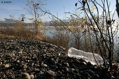 Buvez, éliminez, jetez.... (B.RANZA) Tags: nature pollution plastique écologie croissance irrespect ordure déchet capitalisme sociétédeconsommation