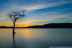 Milarrochy Bay (chrissyboys) Tags: sunset sky tree water scotland photo swan colours oaktreeinn loch lochlomond milarrochybay