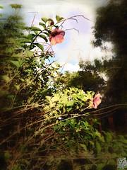 'Calm before the storm' #Photography #PhotoManipulated #IslandLife #Guam #UsagigunnDesignInx #tropical #tropics #Ranching #Farm #Nature #art #artist #SarahMaurer #SarahsArt #magical #Surreal (Usagigunn79) Tags: art nature photography artist farm surreal tropical magical tropics guam photomanipulated ranching islandlife sarahsart sarahmaurer usagigunndesigninx