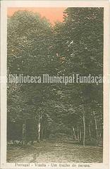 PV036. Portugal - Vizella - Um trecho do parque (Biblioteca Municipal Fundação Jorge Antunes) Tags: parque postal árvores termas arvoredo vizela
