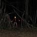 Blixt i skogen / flash in the woods