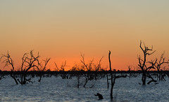 _D8A0648 (fotoDomain) Tags: sunset australia newsouthwales menindee