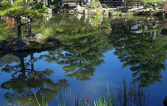Japan (Kyoto) Reflection of pine trees like mirror image (ustung) Tags: trees reflection green nature japan pine garden mirror pond kyoto image kodak outdoor waterreflection