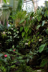 Inside the Tropical House (alexispadilla) Tags: california travel nature garden berkeley bayarea tropical universityofcaliforniabotanicalgardenatberkeley