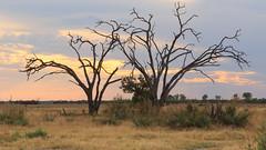 20151107_Savuti_0436-Bearbeitet.jpg (eLiL1860) Tags: botswana safari2015