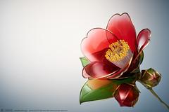 2015    Camellia 01 ( sakae) Tags: hair out pin time cnn ornaments kimono resin camellia sakae      kanzashi                  chromavision  interbee2015